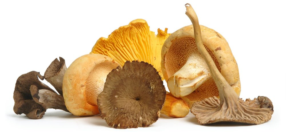 fresh-wild-mushrooms-header.jpg