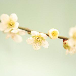 flower-thumb.jpg
