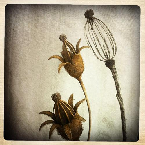 birdcage-flowers
