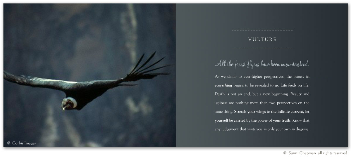 Vulture - excerpt from the book Letters From Earth By Sunni Chapman