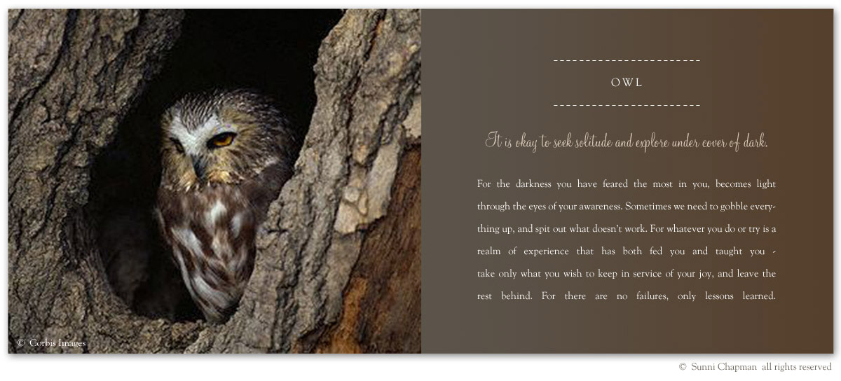 Owl Symbolism - excerpt from the book Letters From Earth By Sunni Chapman