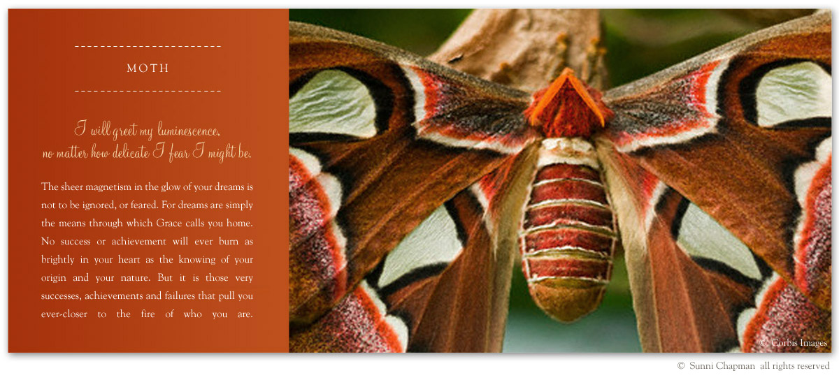 Moth - excerpt from the book Letters From Earth By Sunni Chapman