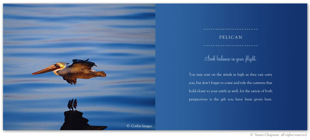 Pelican - excerpt from the book Letters From Earth By Sunni Chapman