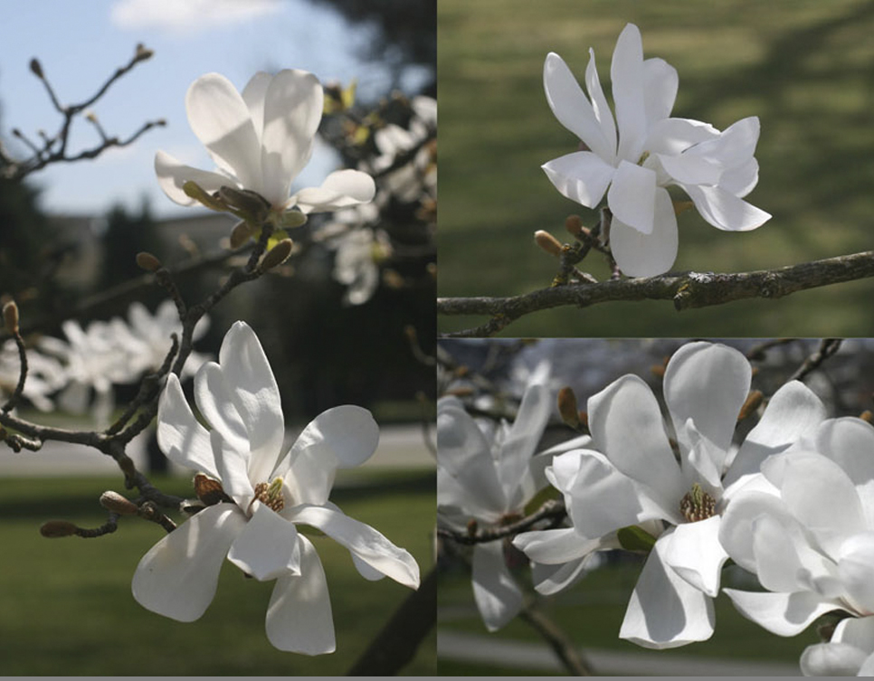Workshop-template-crop-magnolia photos.jpg
