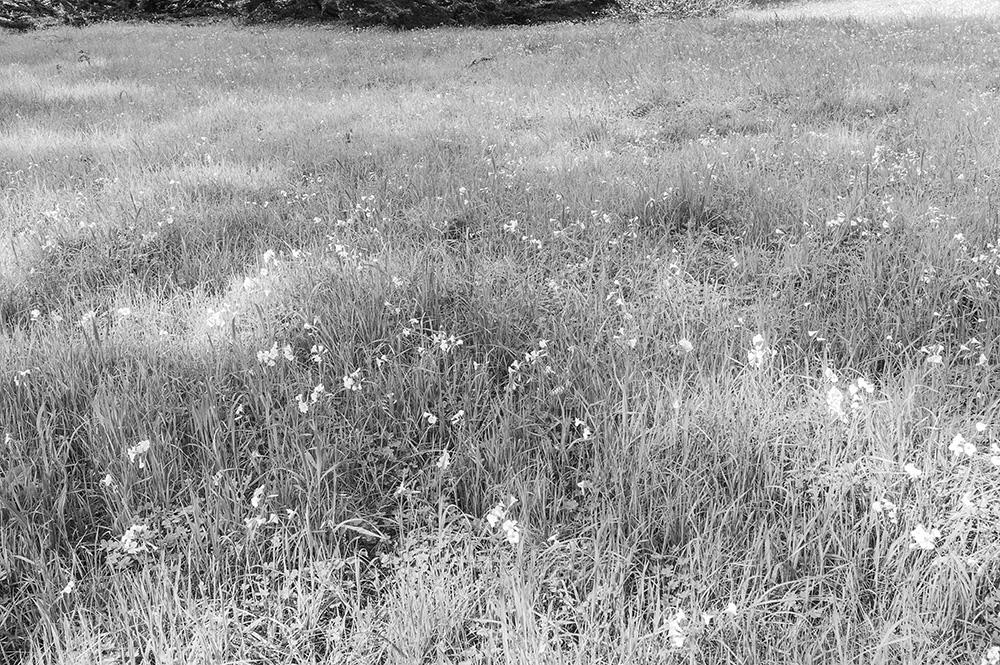 Grasses. Fitzgerald Reserve. 2017 Leica M1