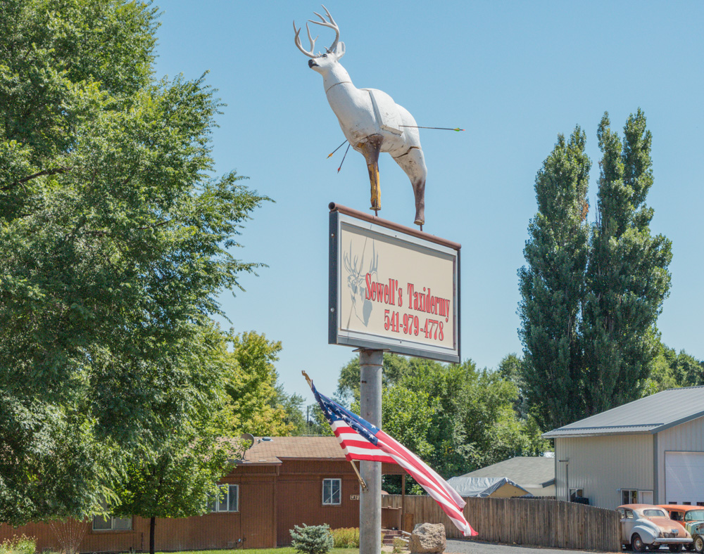 Deer with Arrows. Hines, OR.2017. Canon 5DSr.