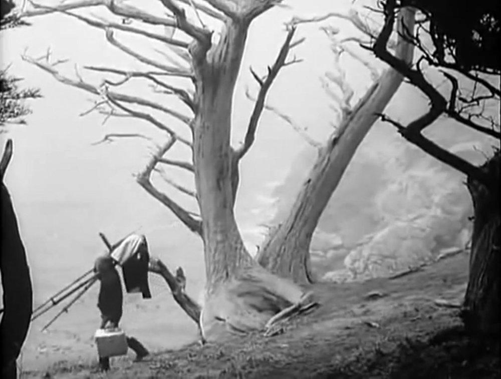 "Edward Weston, Point Lobos. 1946. from the 1946 documentary ""The Photographer"""