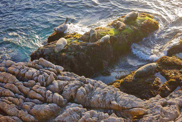 Harbor Seals and Rocks, Point Lobos. 2008. Canon 1Ds Mark III