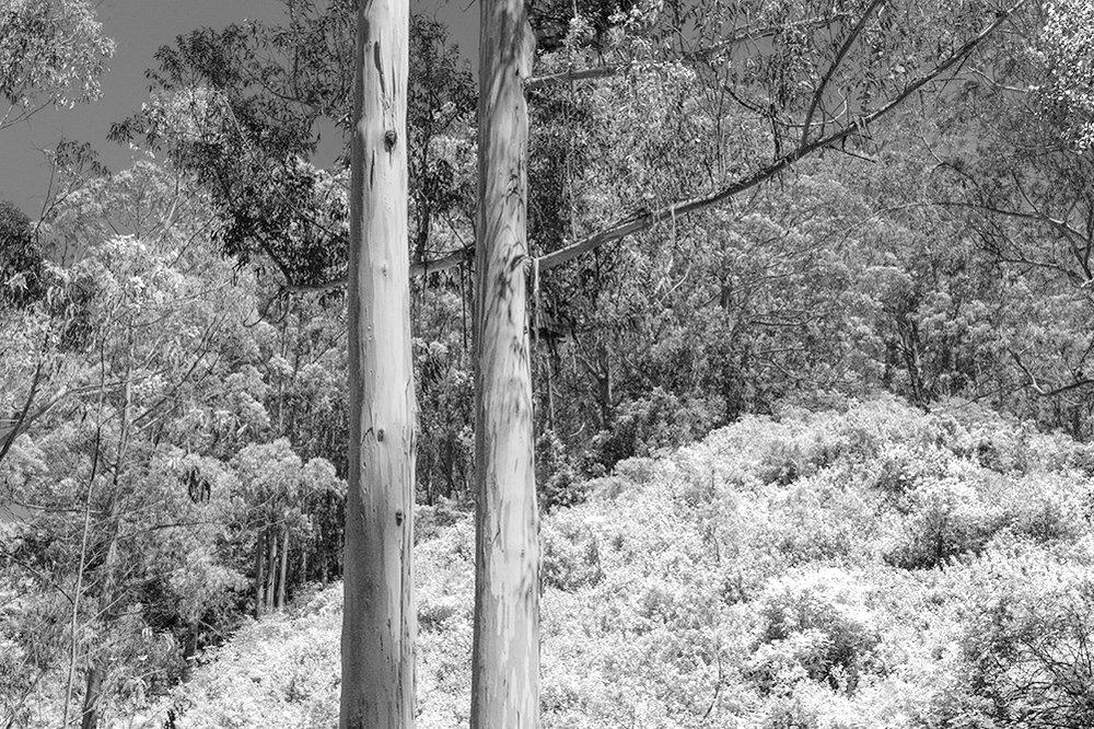 Hillside. Pacifica, CA. 2017. Canon 5DSr.