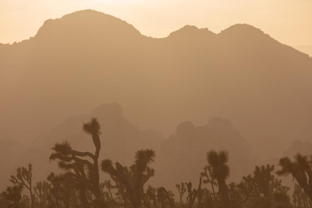 Joshua Tress and Mountains.2018. Canon EOS 5DSr
