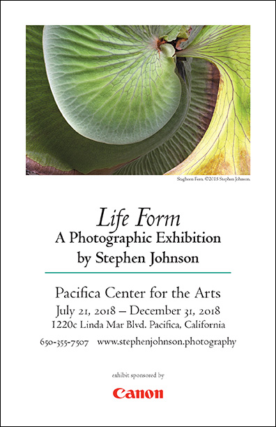 Life Form Online Gallery.  Invitation pdf.