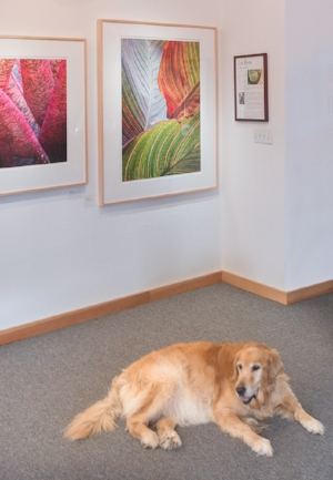 Sandy, my 14 year old sweetheart. Our gallery mascot.