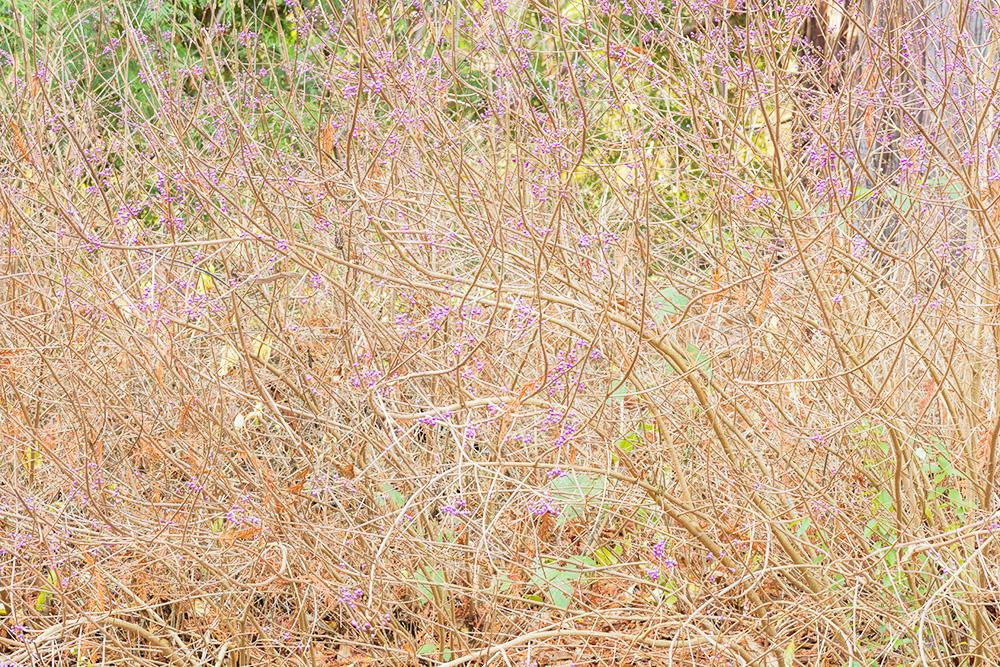 Brush and Purple Flowers. Washington Park Arboretum. Seattle, WA. 2017. Canon 5DSr.