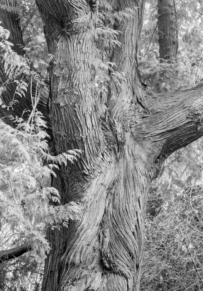 Washington Park Arboretum. Seattle, WA. 2017 Canon 5DSr.