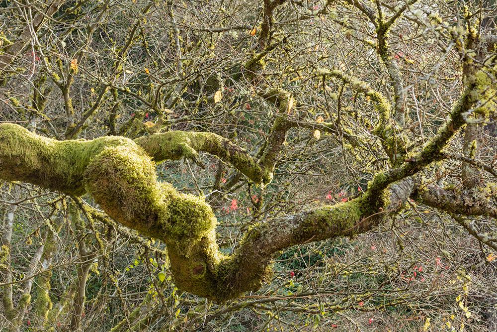 Washington Park Arboretum. Seattle, WA. 2017. Canon 5DSr.