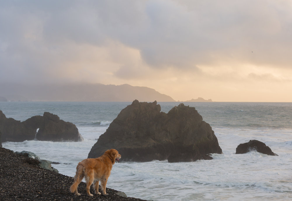 Sandy at Mussel Rock. Pacifica, CA. 2014. Canon Canon EOS 5D Mark III.