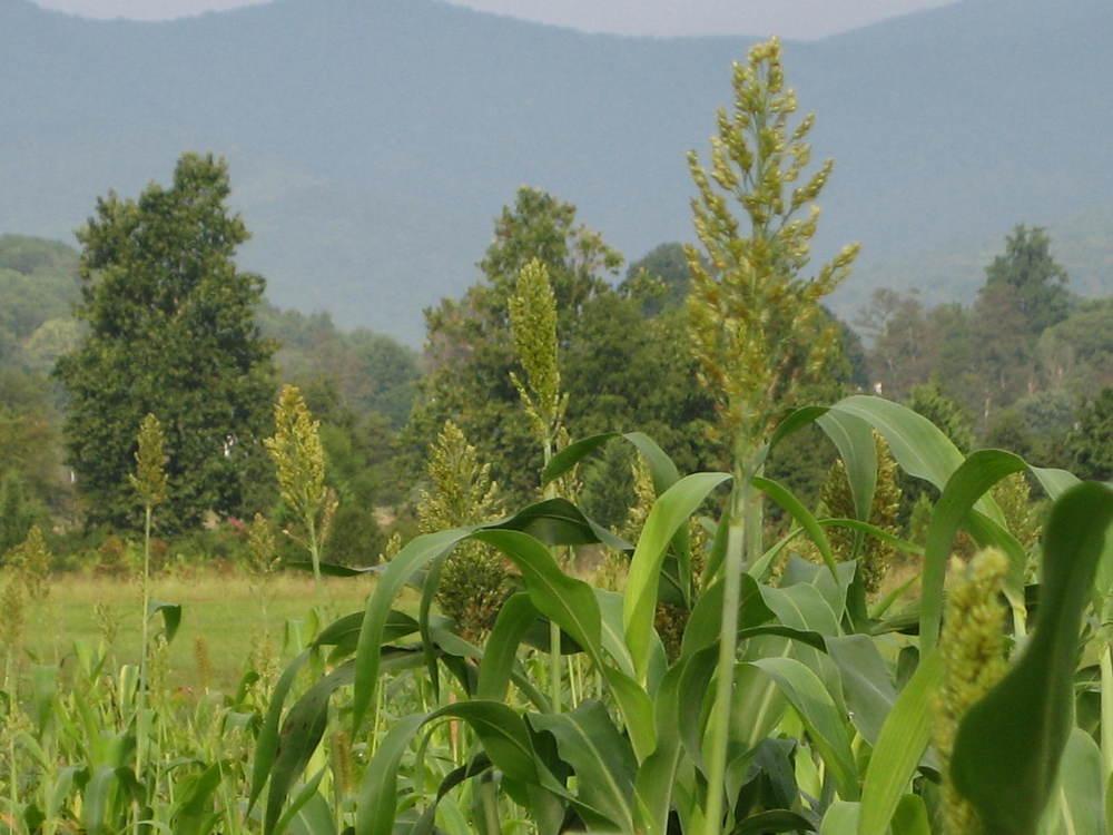 vegetation_image.jpg