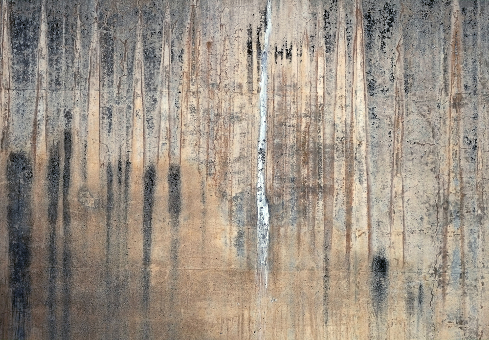 birch wall.jpg
