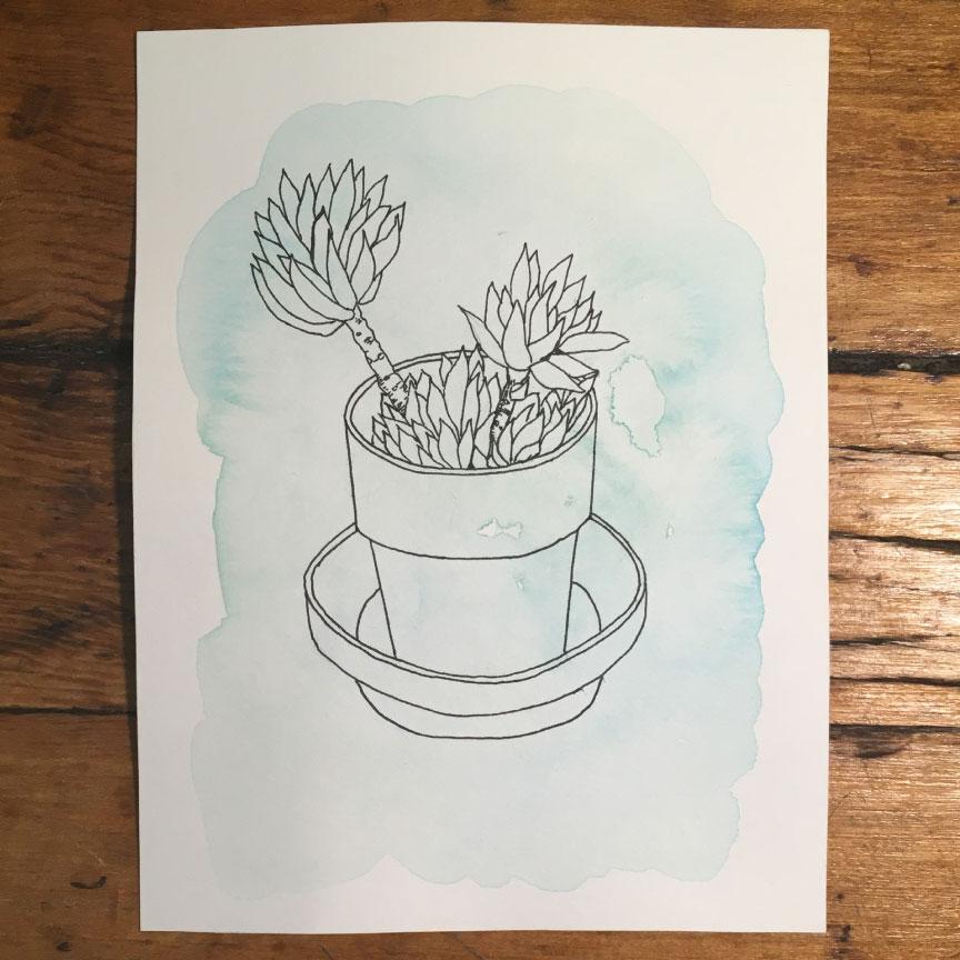 succulent1ink.jpg
