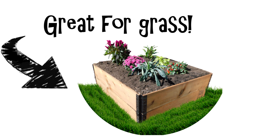 raised_garden_bed_grass.png