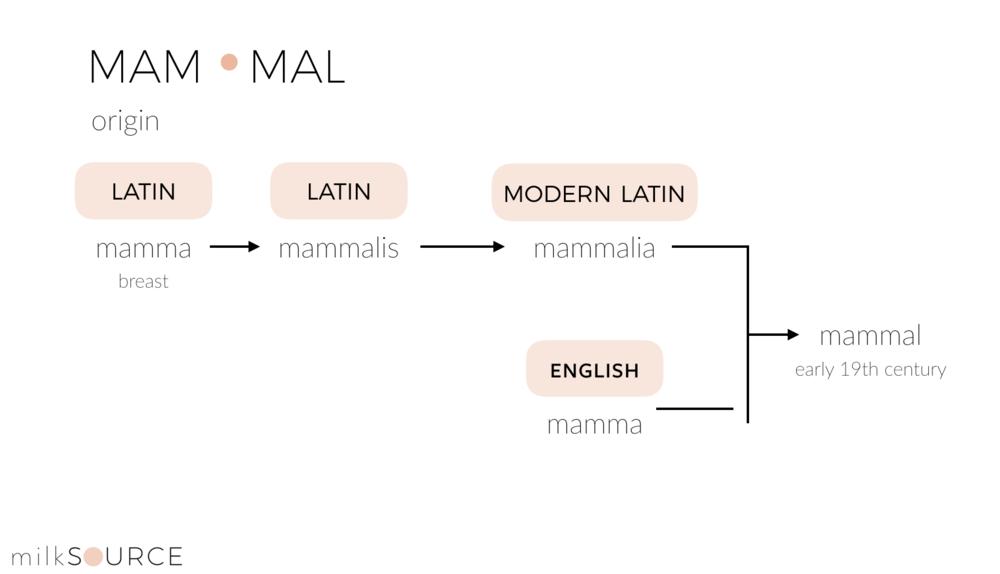 Mammal Etymology_milksource.png
