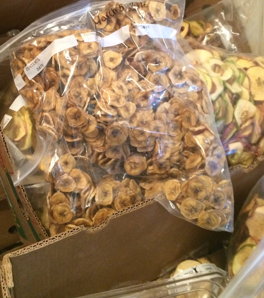 Apple and banana chips waiting to be packaged.