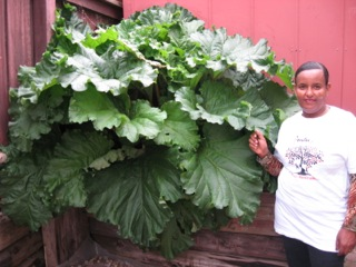 D. with big beautiful rhubarb.jpeg