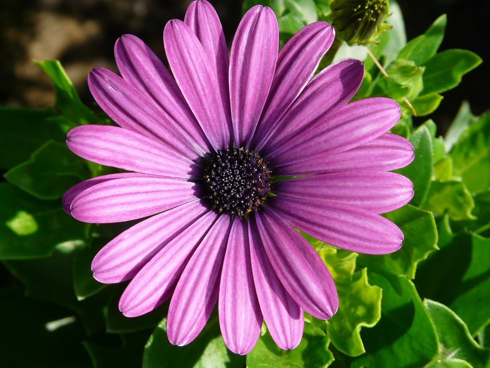 violet-color-meaning.jpg