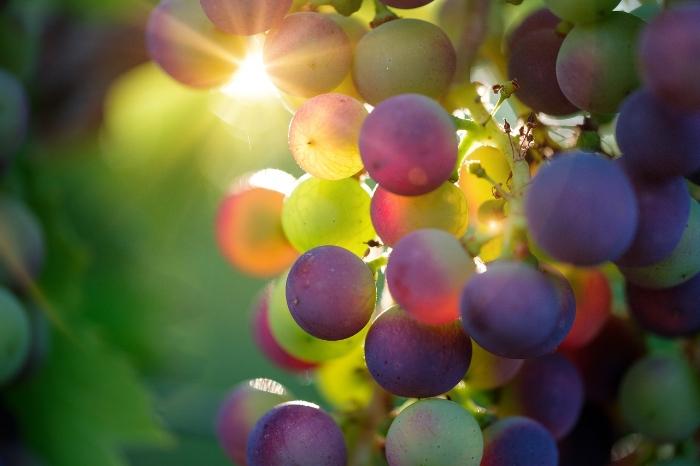 medical-medium-grapes.jpg