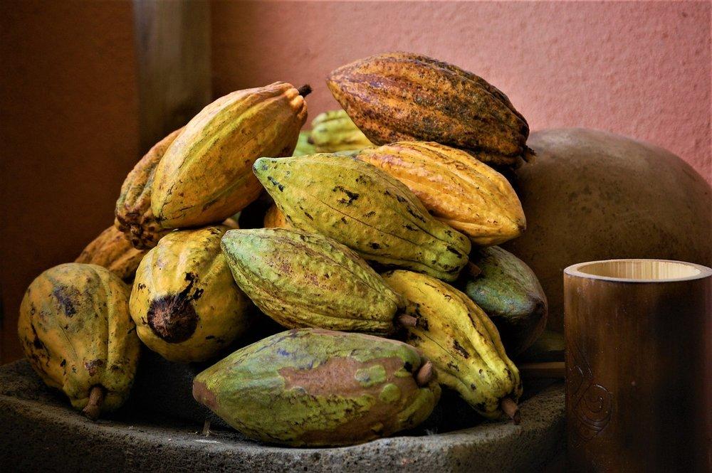 cacao-medicine.jpg