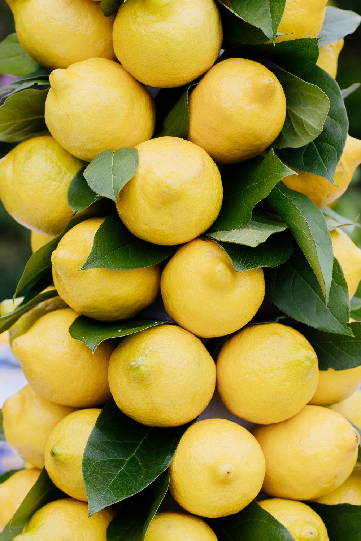 Lemon Topiary How To | Photo by Felicia Lasala