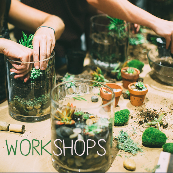 Glass Gardens Terrarium Workshops Norfolk and Virginia Beach