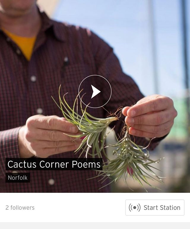 Cactus corner poems on @soundcloud #cactus🌵 #spokenword #poetry
