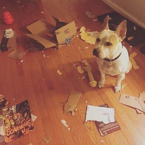 No matter how good your day was yesterday - it won't be as good as Zorah's was.  #thefurkidco #dogwalking #dogoftheday #dogsofinstagram #nycpups #toomuchfun #professionalboxopener #notabookfan