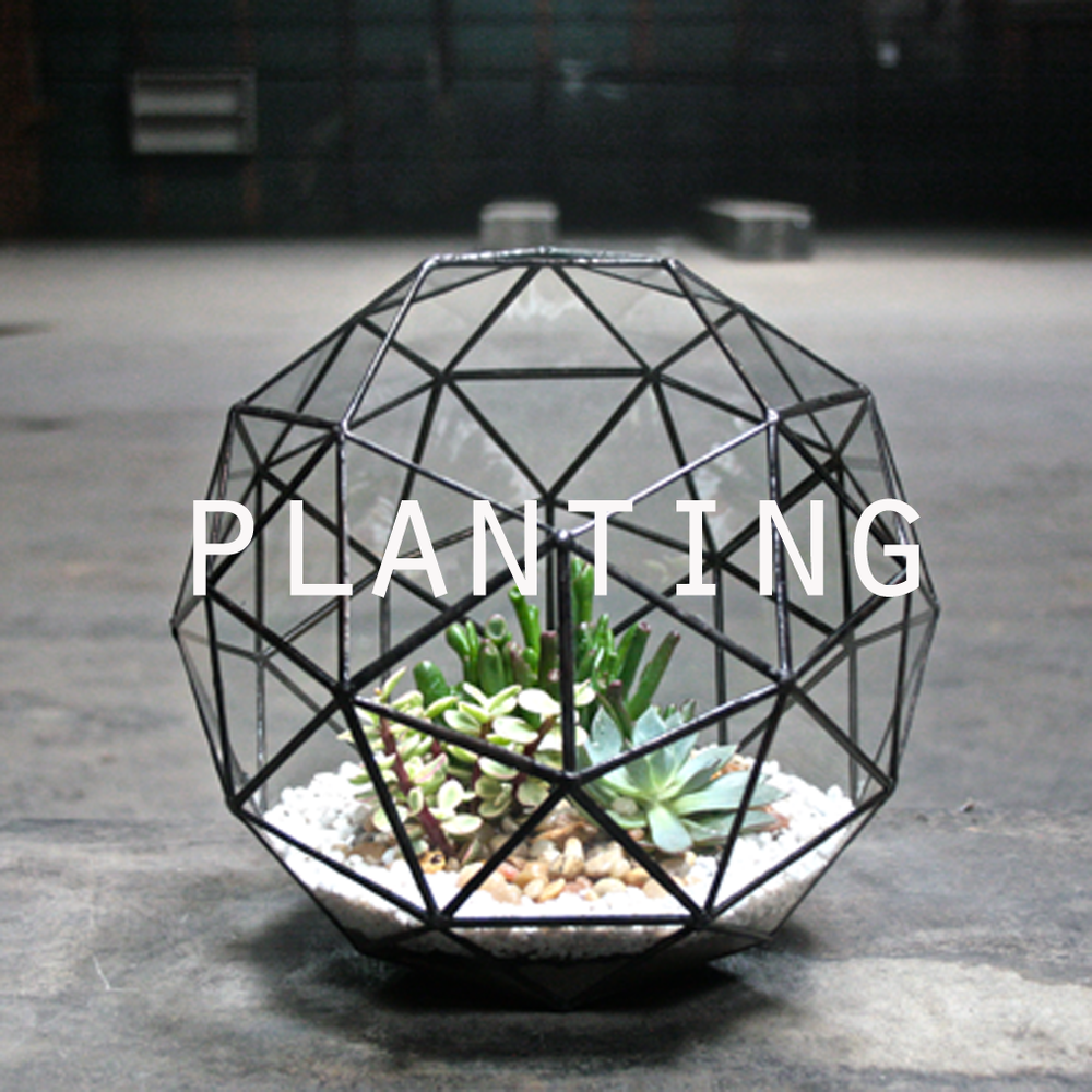 planting2.png