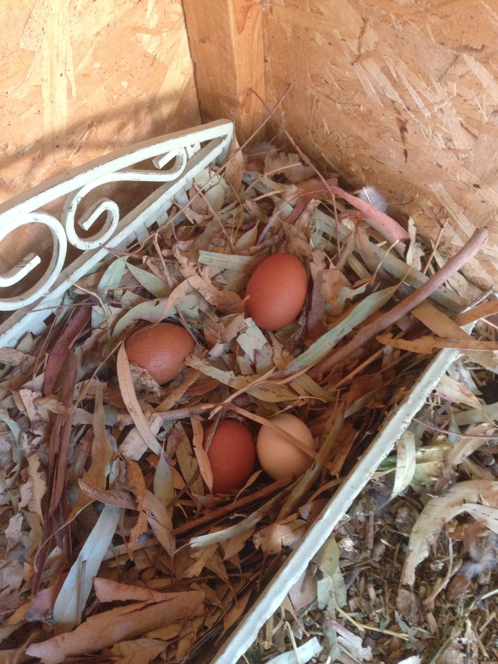 the chickens started laying eggs :)