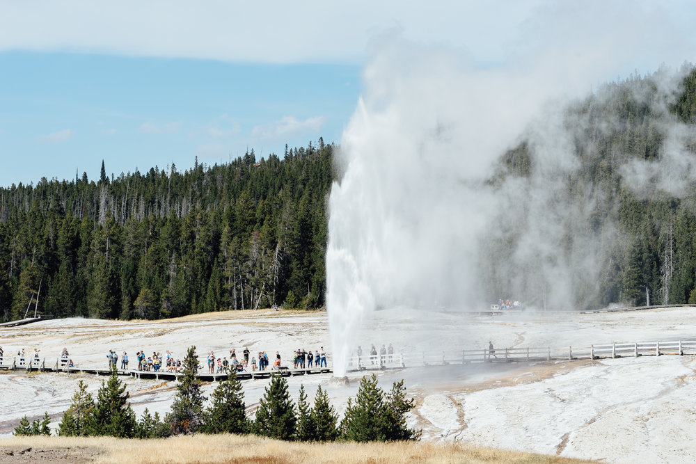 Upper Geyser Basin  is home to some of the most impressive geysers in Yellowstone, the most famous being the  Old Faithful Geyser.  Picture here is the  Beehive Geyser .