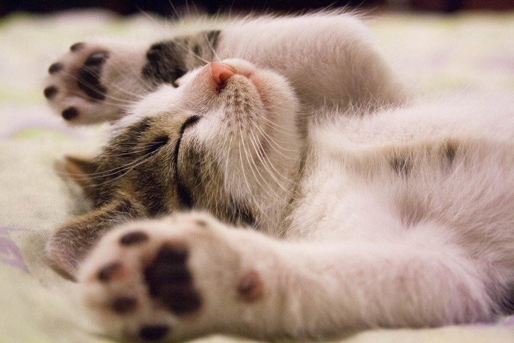 ein katzenbild - echt jetzt?