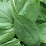 spinach-leaf-150x150.jpg