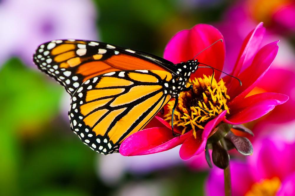Vallée des papillons — Habitat...