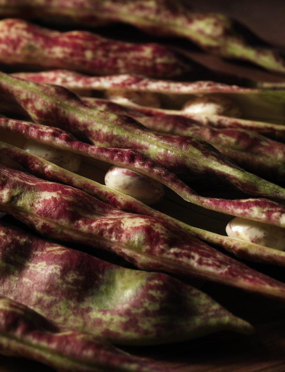 beans_0120 copy.jpg