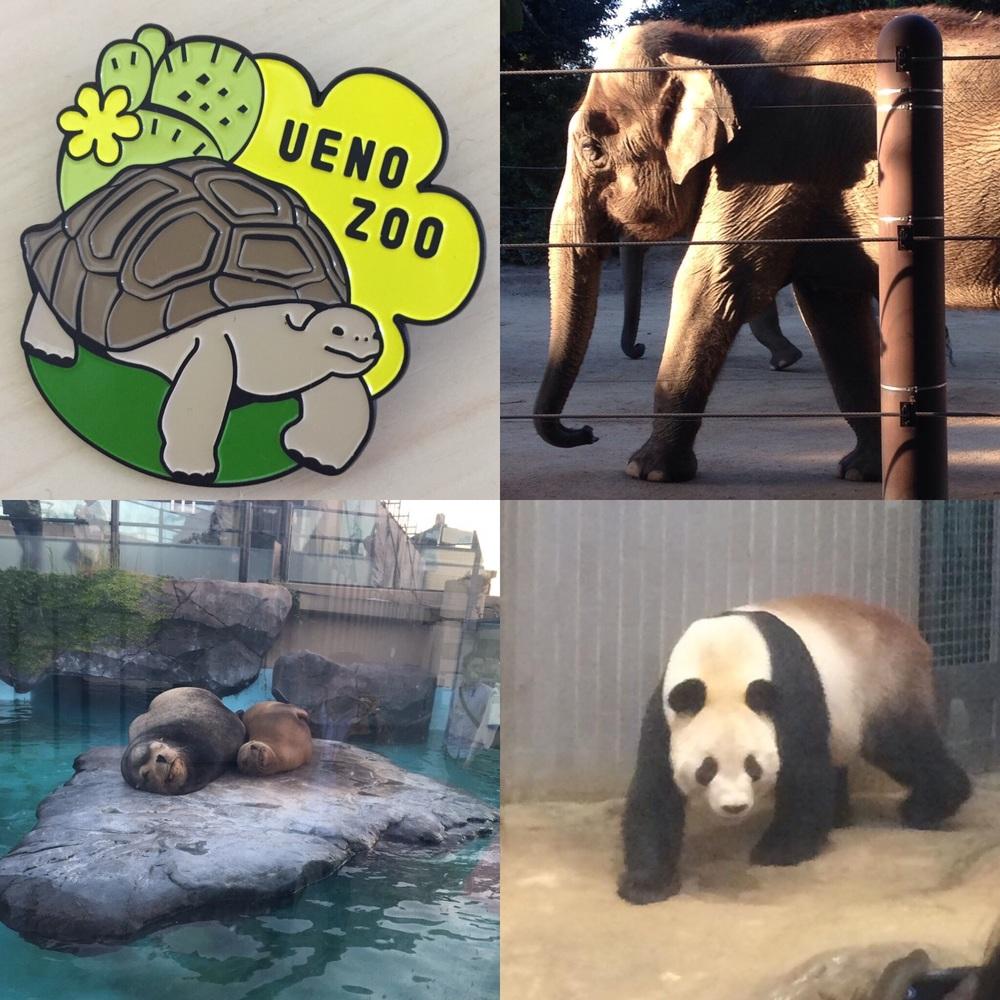 ゾウガメのバッジと動物たち