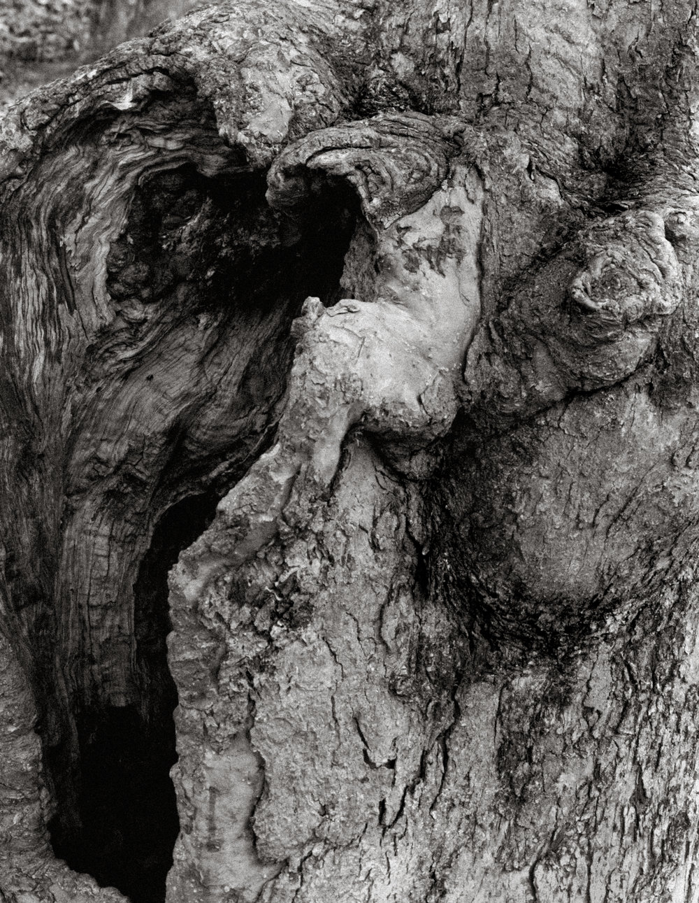 Treehole1.jpg