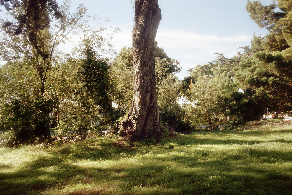 SF-TreeManShadow.jpg