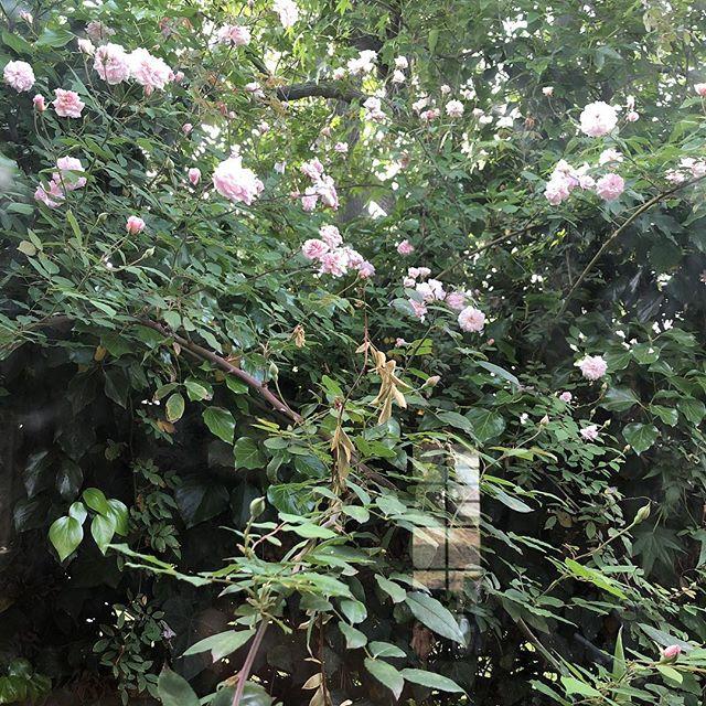 Foto sacado desde la ventanilla del salón. Se nota que la primavera nunca se reprime.