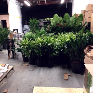 Max watches over the plants in the warehouse.