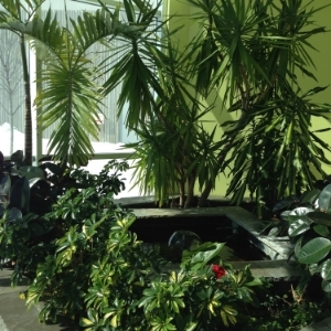 Downtwon Toronto Tropical garden and watrer feature in commercial building