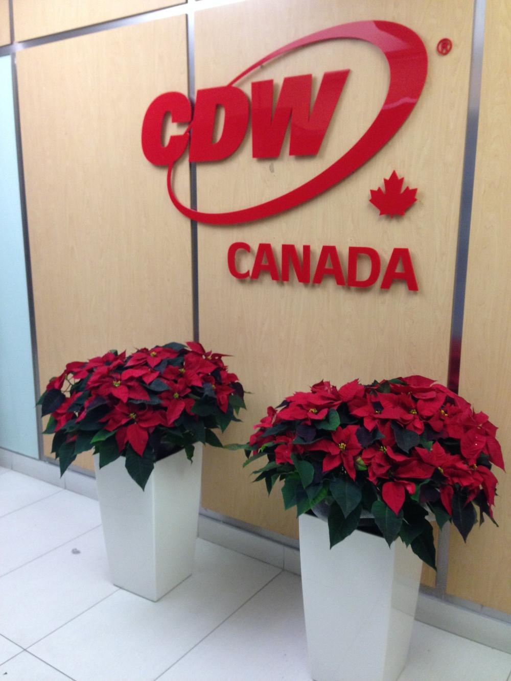 CDW Holiday Planters 2.jpg