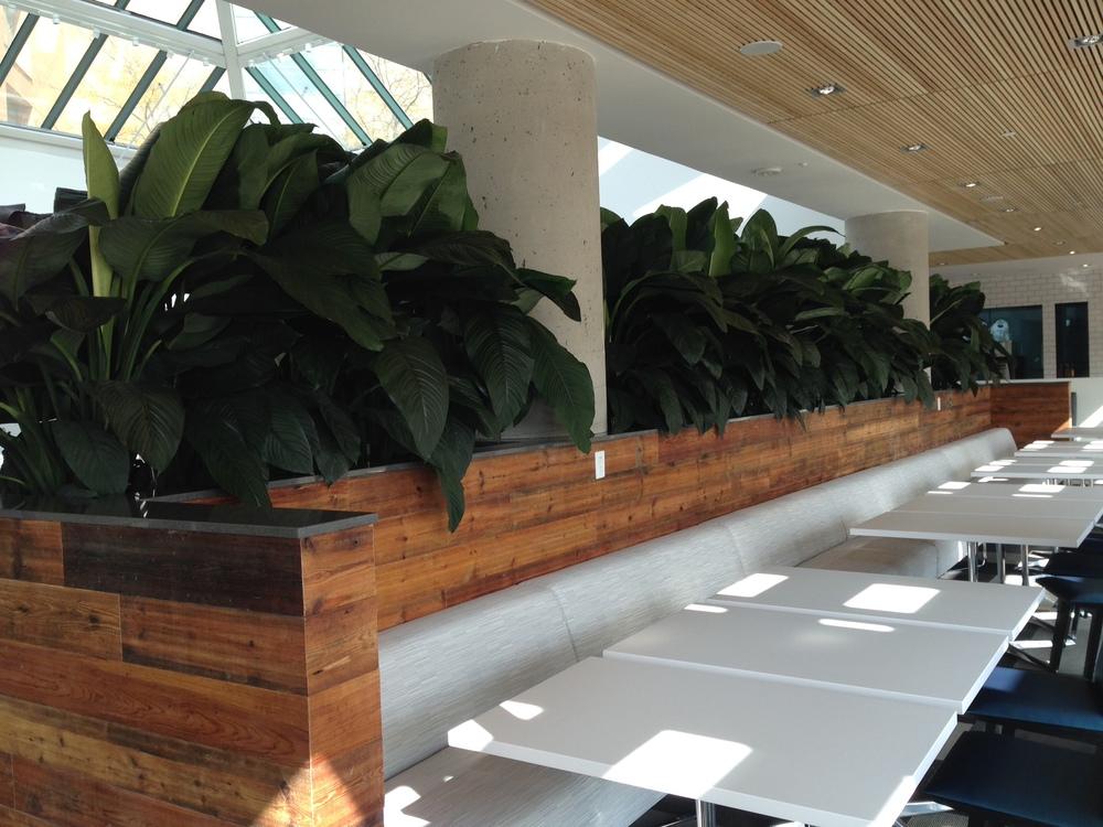 Roche Cafeteria planter Close.jpg
