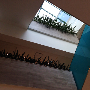 Plantpros Inc Design of Atrium in Toronto Office